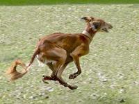 Geschwindigkeitsbegrenzung auf der Hundewiese